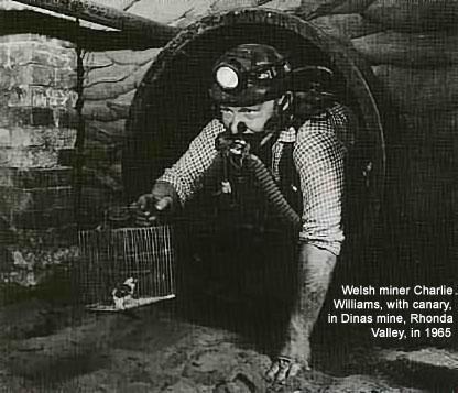 Gruvarbetera med fågel som gasvarnare